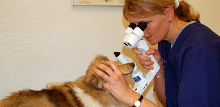 Øjenundersøgelse